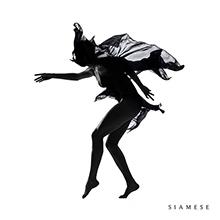 SIAMESE/SIAMESE